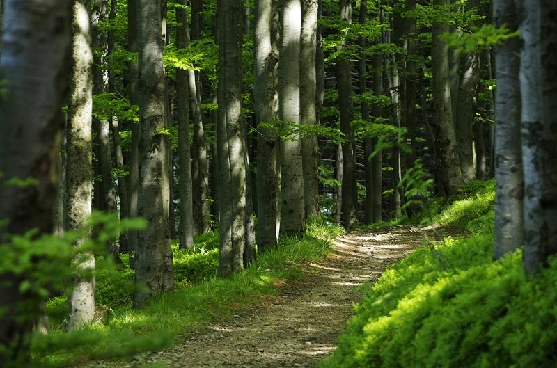 trasy rowerowe w Beskidzie Śląskim