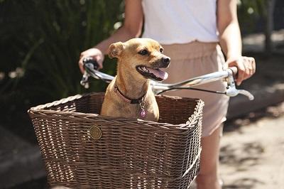 koszyk z wikliny dla psa