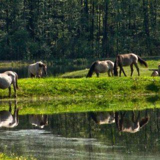 Roztoczański Park Narodowy - Zwierzyniec. Fotografia: www.polskieszlaki.pl.